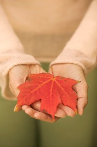 Cupped Hands Holding Maple Leaf in Autumn